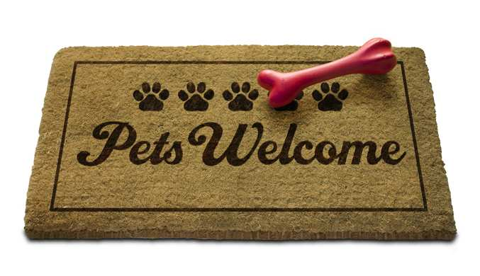 What Do Dog-Friendly Hotels and Kosher Kitchens Have in Common?